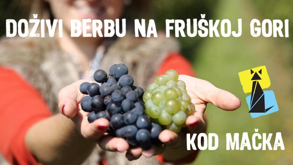 """""""Mačkov podrum"""" vas poziva na berbu grožđa: Vino je poljubac postojanja"""