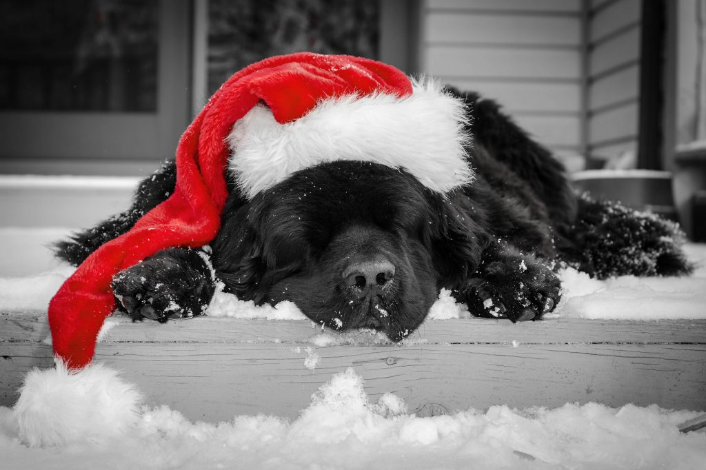 "Praznična depresija: Kako se izboriti sa ""crnim psom"" u Deda Mrazovom kostimu?"